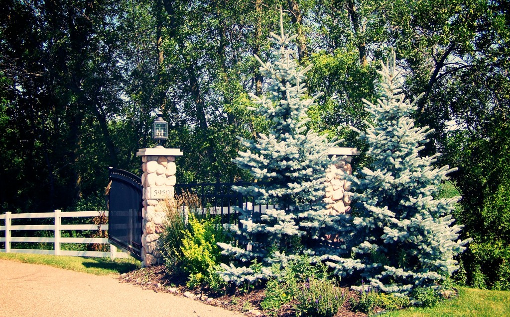 Pictures Of Landscaping With Spruce Trees 93