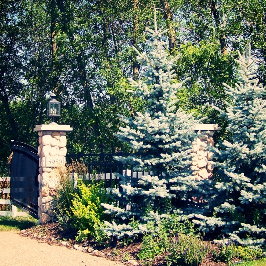 blue-spruce-landscaping-plymouth-mn