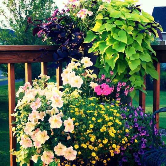 flower-urn-color-annuals-deck-mn.jpg
