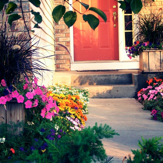 flowers-color-sidewalk-annuals-urns-mn.jpg