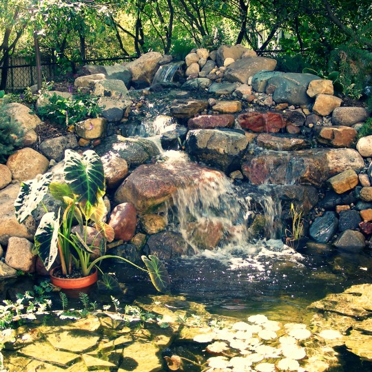 Work great goats landscapinggreat goats landscaping for Koi pond builders mn
