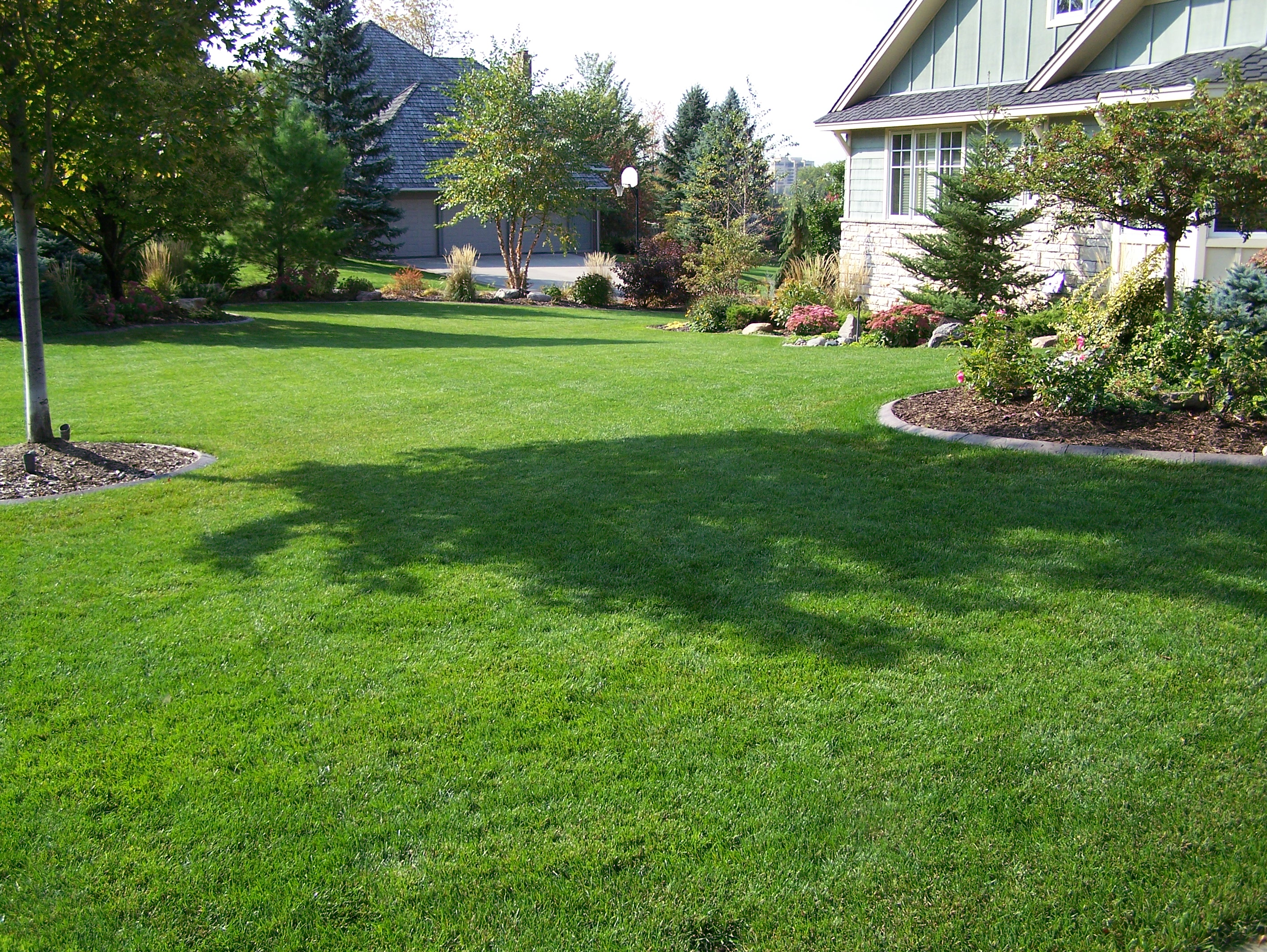 Spring Landscaping Tips minnesota spring lawn tips for getting your yard readygreat goats