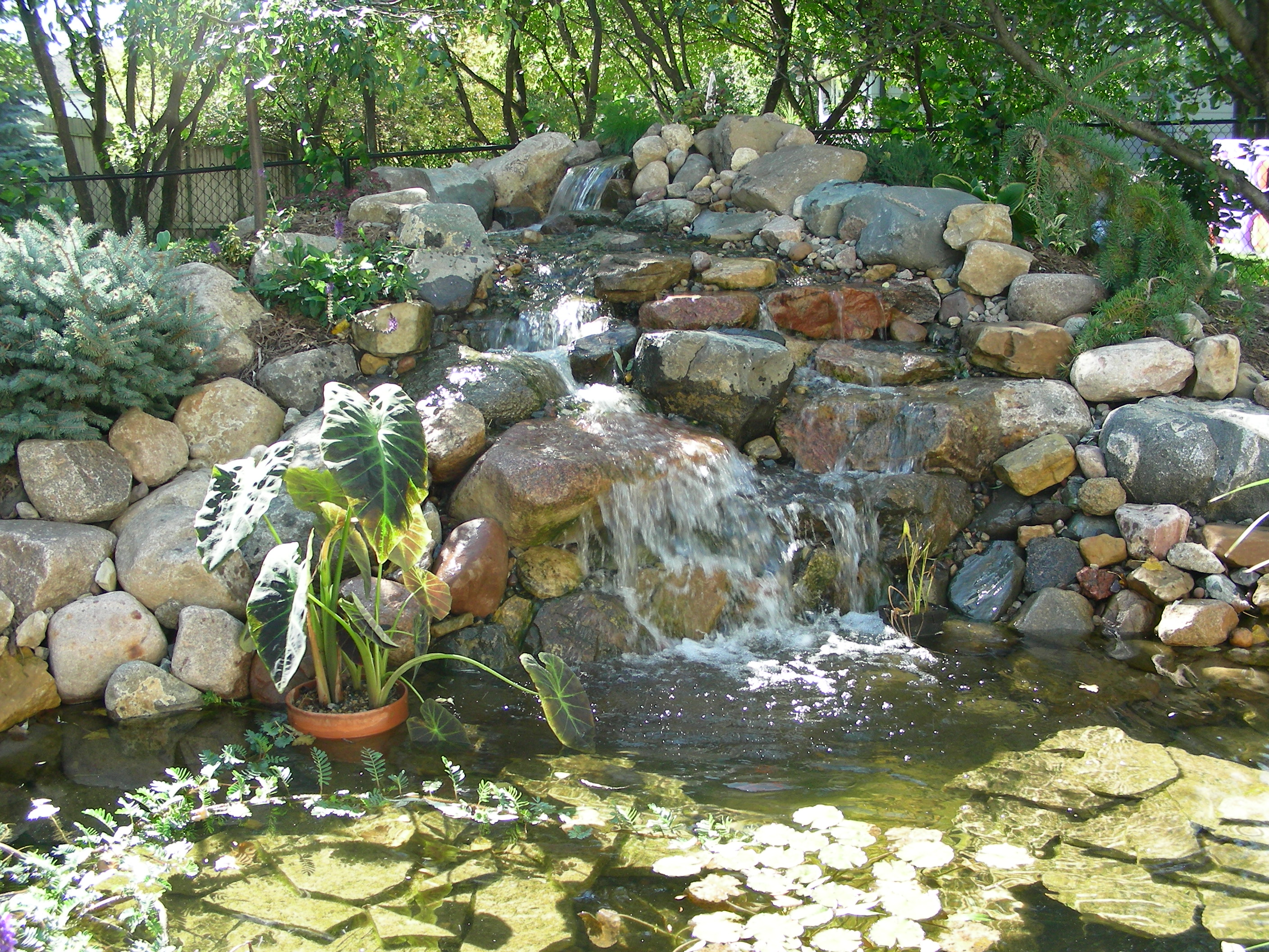 Beautiful backyard water features great goats for Pond features and fountains